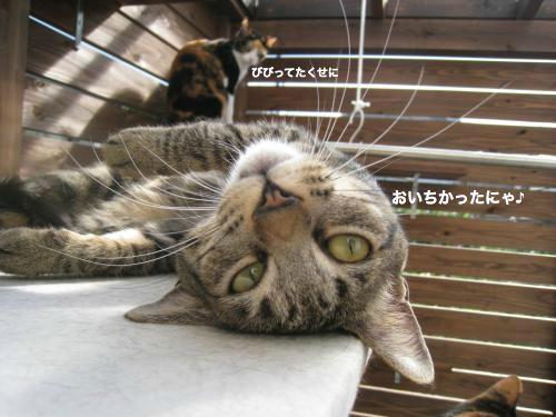 来客と猫(10)