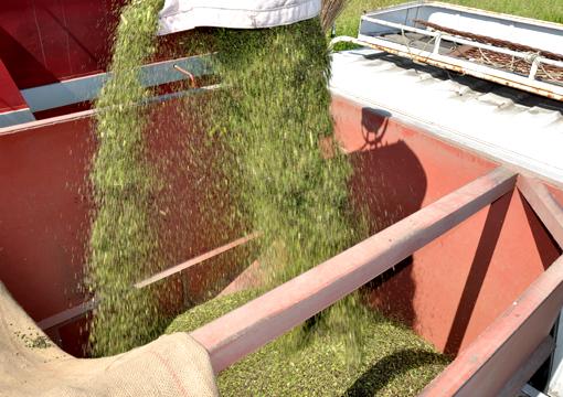 蕎麦収穫_03