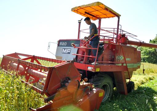 蕎麦収穫_02