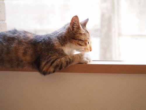 ノラ猫アイアイの日向ぼっこ (C)東京ノラ猫&家猫カフェ