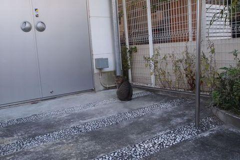 ノラ猫 (C)東京ノラ猫家猫カフェブログ