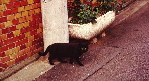 黒猫ノスタルジア (C)東京ノラ猫家猫カフェ