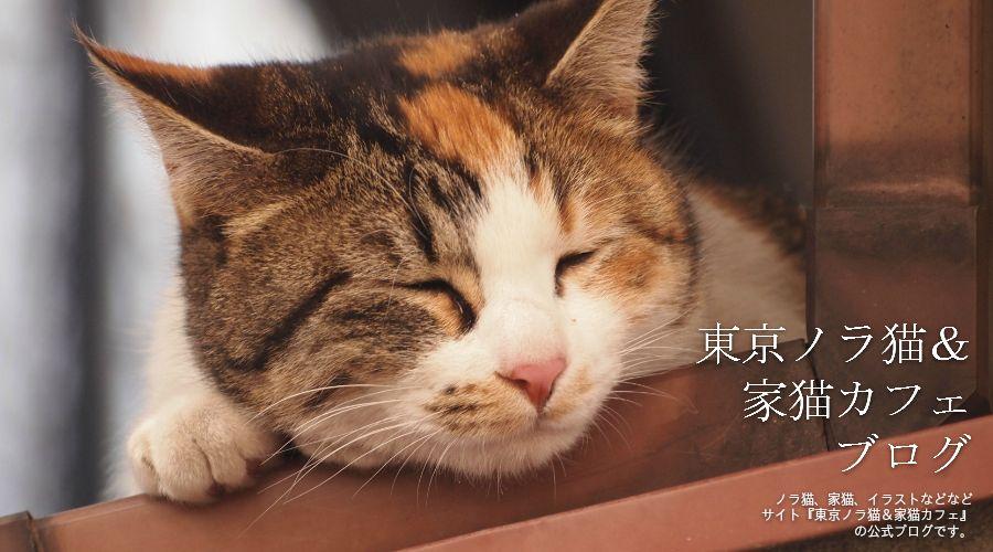 東京ノラ猫&家猫カフェブログビルボード画像