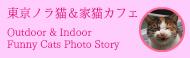 東京ノラ猫&家猫カフェ ノラ猫や家猫の写真を中心に掲載しているサイトです。
