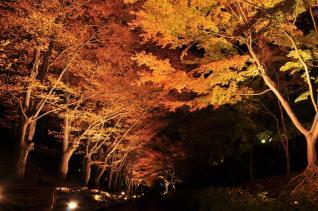 2011年11月12日 上田城けやき並木紅葉ライトアップ2011