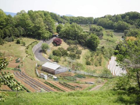 丘の畑78
