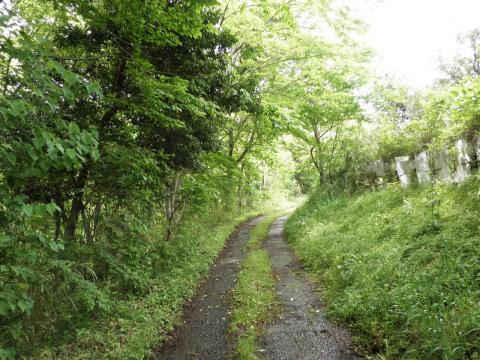 若葉の農道19