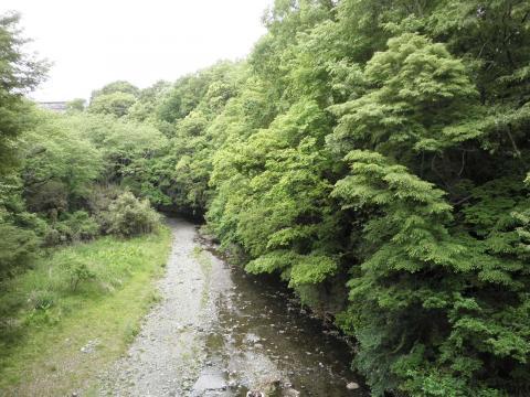 新緑の葛葉渓谷98