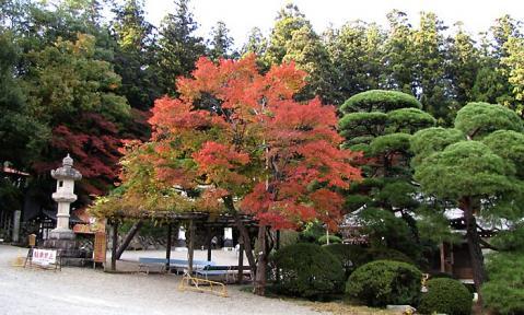 長瀞宝登山神社