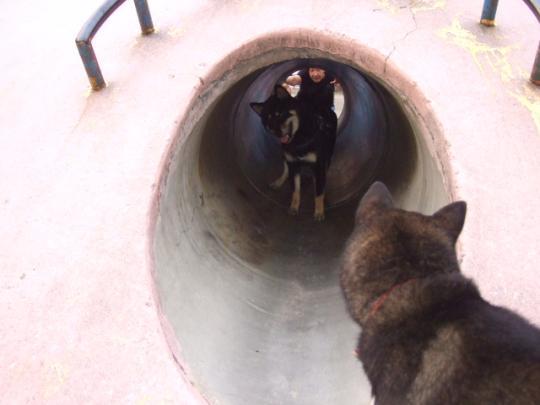 あいちゃんトンネル出来た~