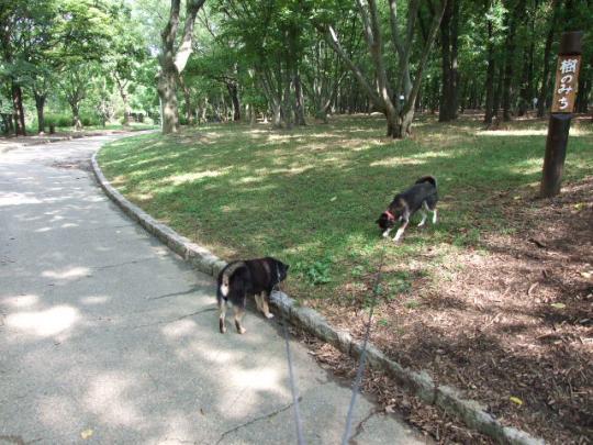 今日の大泉緑地公園