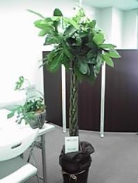 11-09-15_003_convert_20110918202012.jpg