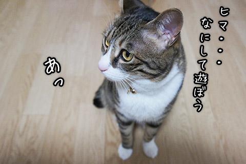tom110409_01.jpg