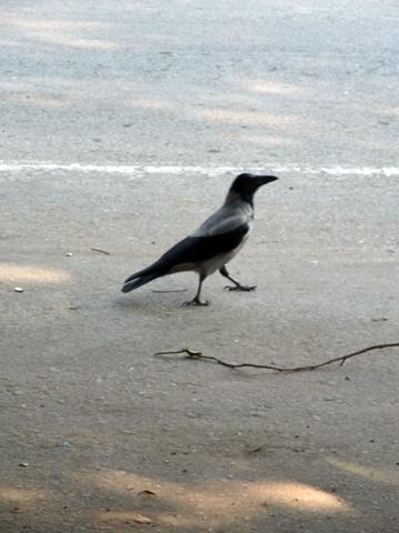 cairo bird 2013-1