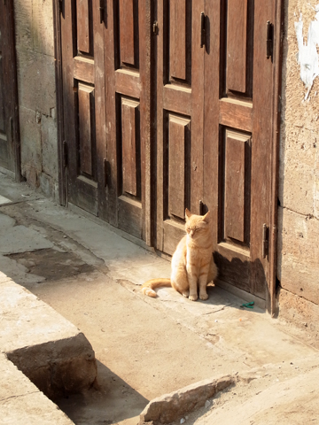 egyptiancat2013-7