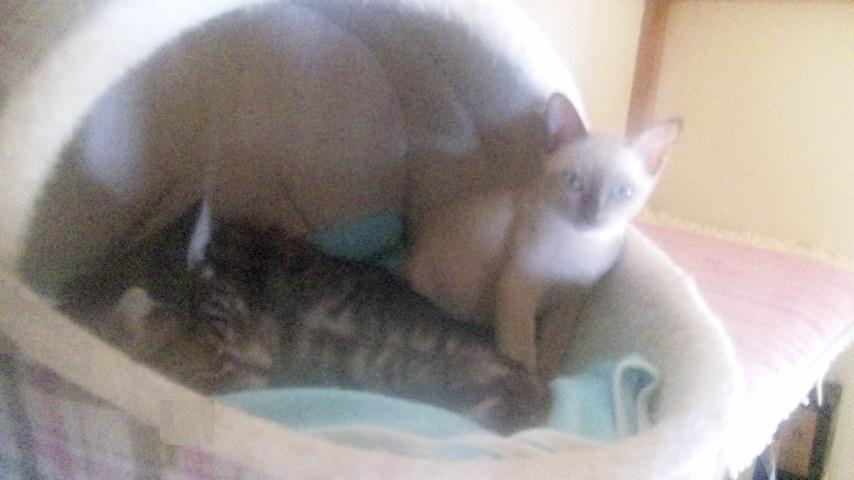 fluffy&hikaru3