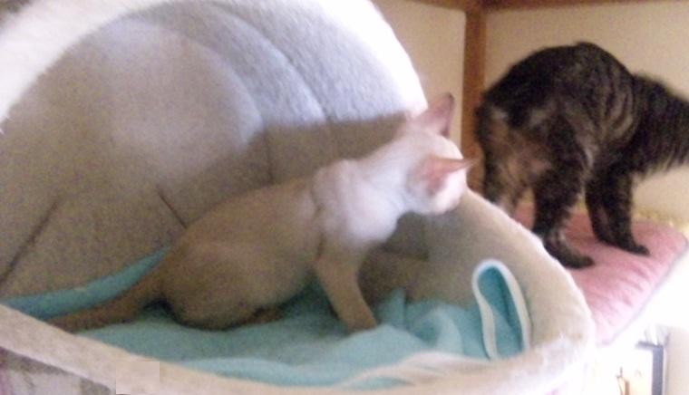 fluffy&hikaru4