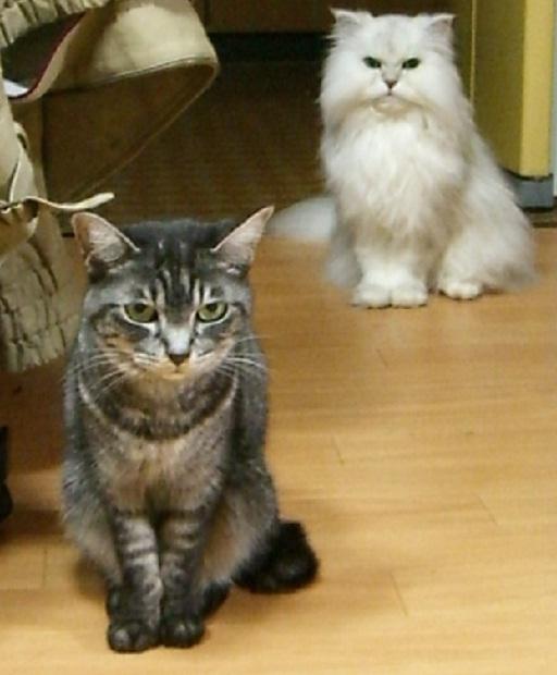 fluffy&yutaka 1