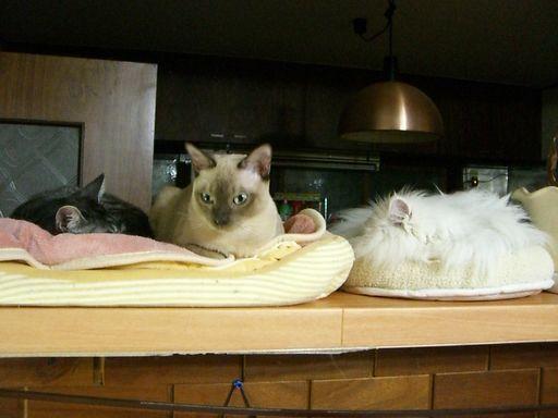 fluffy&yutaka&hikaru 1