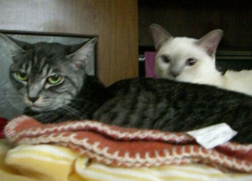 fluffy&miu 2