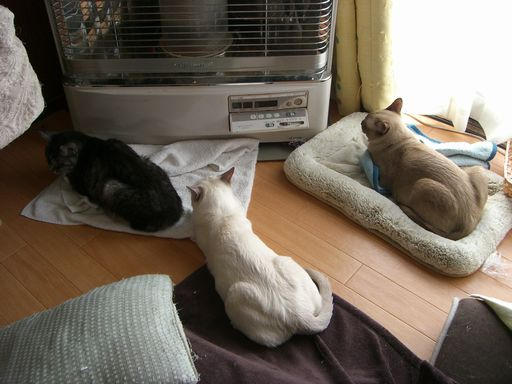 fluffy&hikaru&miu 4