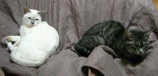 fluffy&miu 3