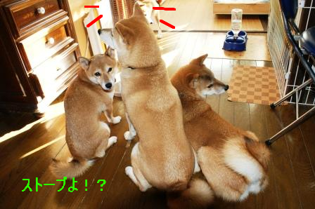 12_20101111075524.jpg