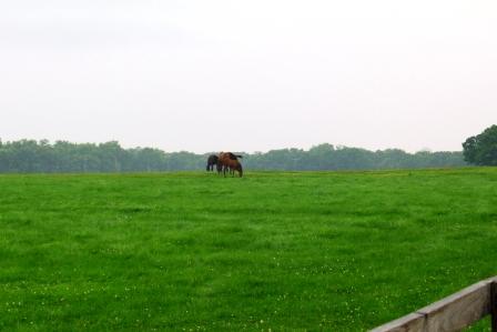 門別の馬2