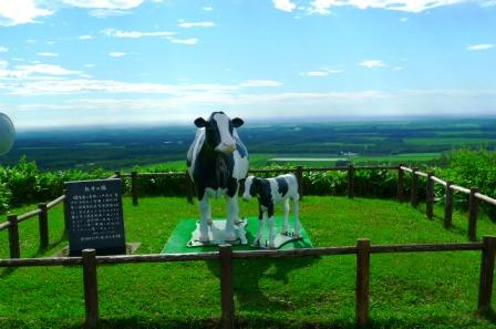 開陽台の牛
