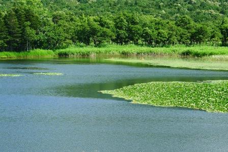 知床5湖2