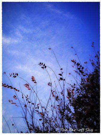 2011-11-09-01.jpg