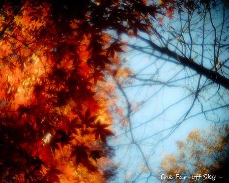 2011-12-19-01.jpg