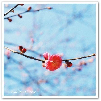 2012-03-03-02.jpg