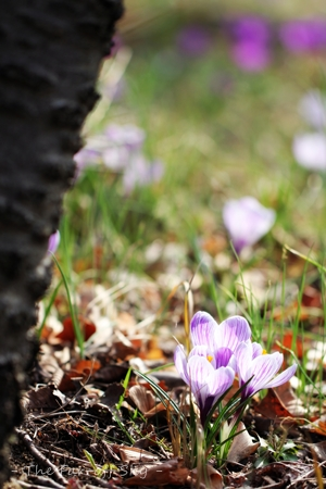 2012-03-23-01.jpg