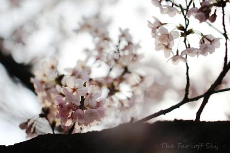 2012-04-10-01.jpg
