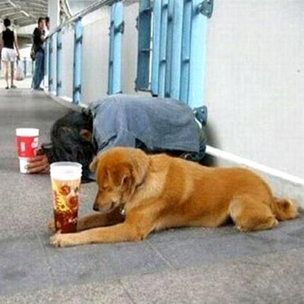 補助金を求める犬