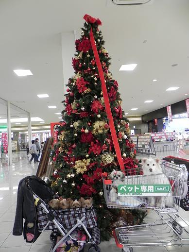 クリスマスツリーと  10/29
