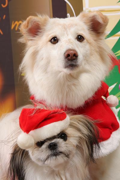 クリスマス写真  12/23用