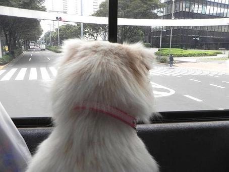 バス車内3