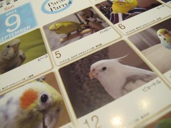 calendar5.jpg