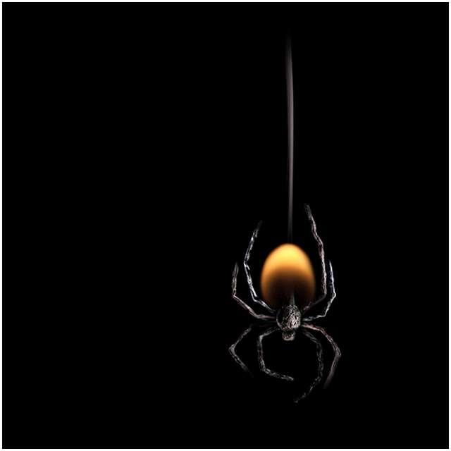 蜘蛛(マッチ