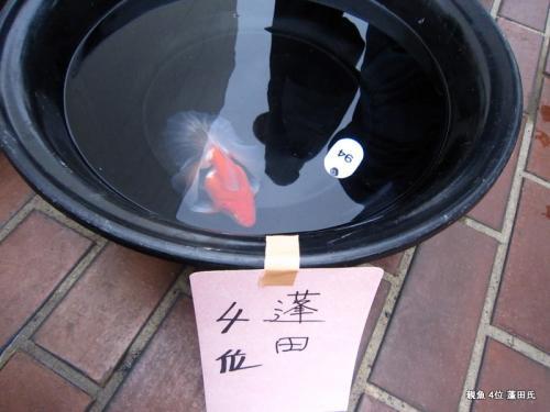 親魚 4位 蓬田氏