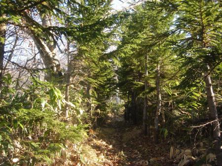 サクサクの登山道