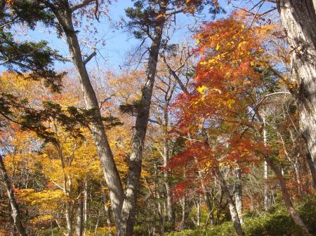 紅葉を見ながらのんびり下山