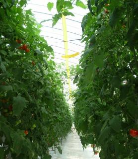 トマトハウス