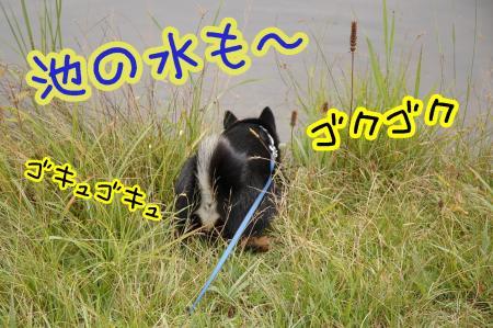 20100811-13-061.jpg