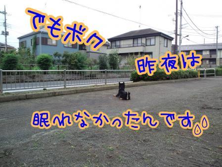 CA3F0051-1.jpg