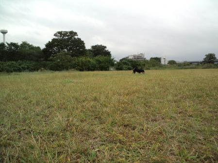 CA3F0094_20101030084208.jpg
