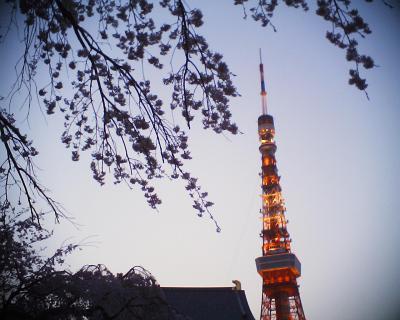 夕暮れの東京タワーと枝垂れ桜:R2