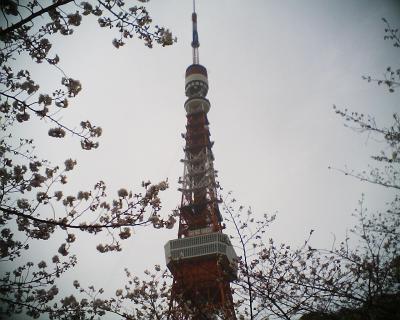 サクラに包まれた東京タワー:R2
